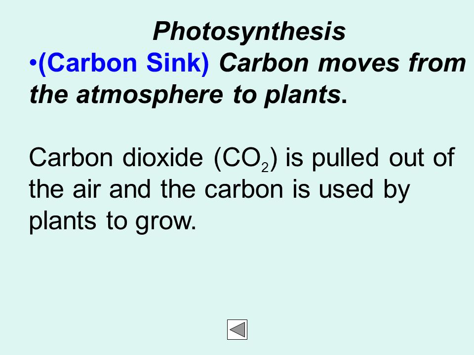 Photosynthesis (Carbon Sink) Carbon moves from the atmosphere to plants.