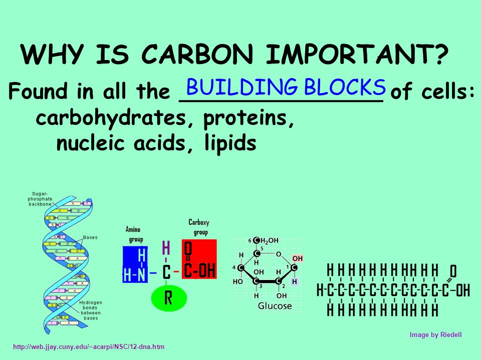 Carbon Dating Background