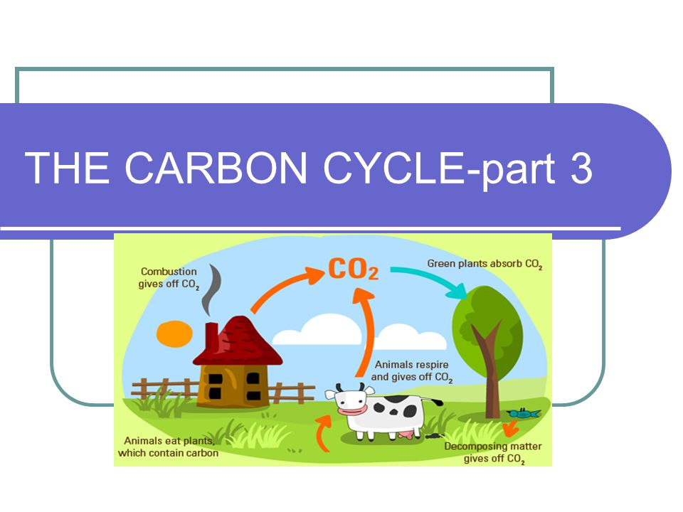 THE CARBON CYCLE-part 3