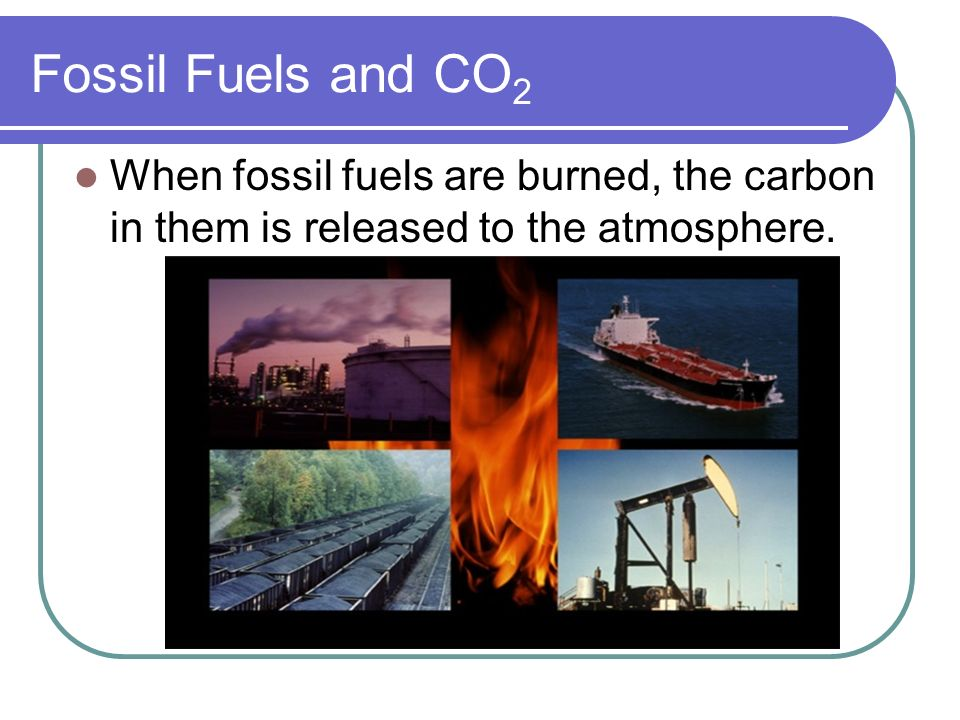 Fossil Fuels and CO2 When fossil fuels are burned, the carbon in them is released to the atmosphere.