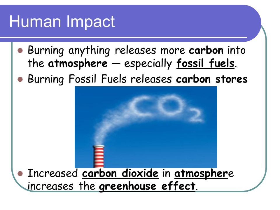 Human Impact Burning anything releases more carbon into the atmosphere — especially fossil fuels. Burning Fossil Fuels releases carbon stores.