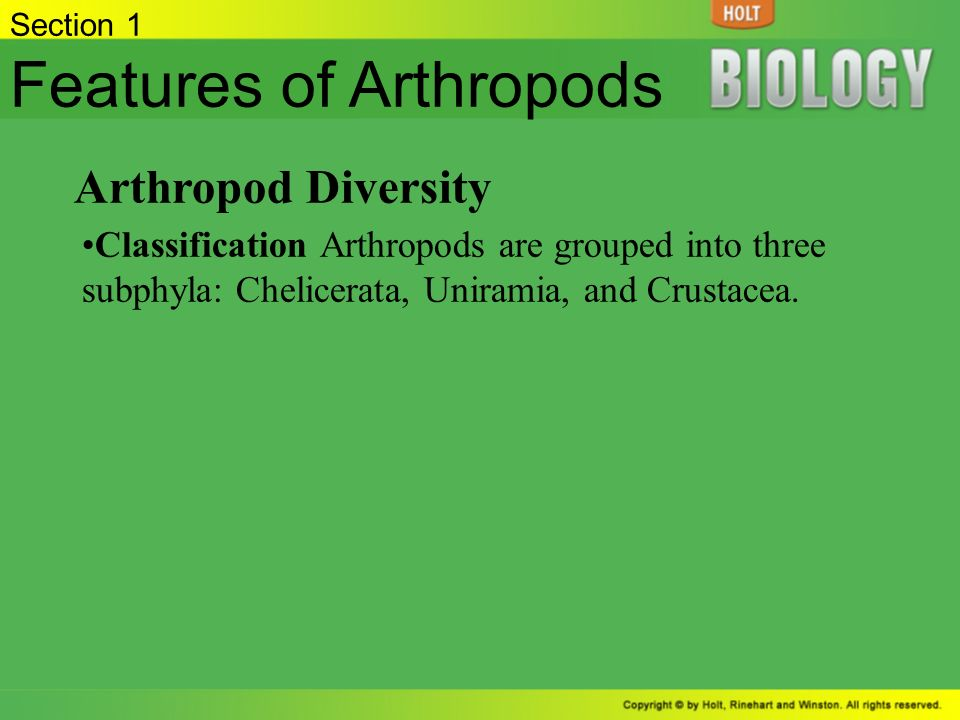 summarize the evolutionary relationship of arthropods and annelids