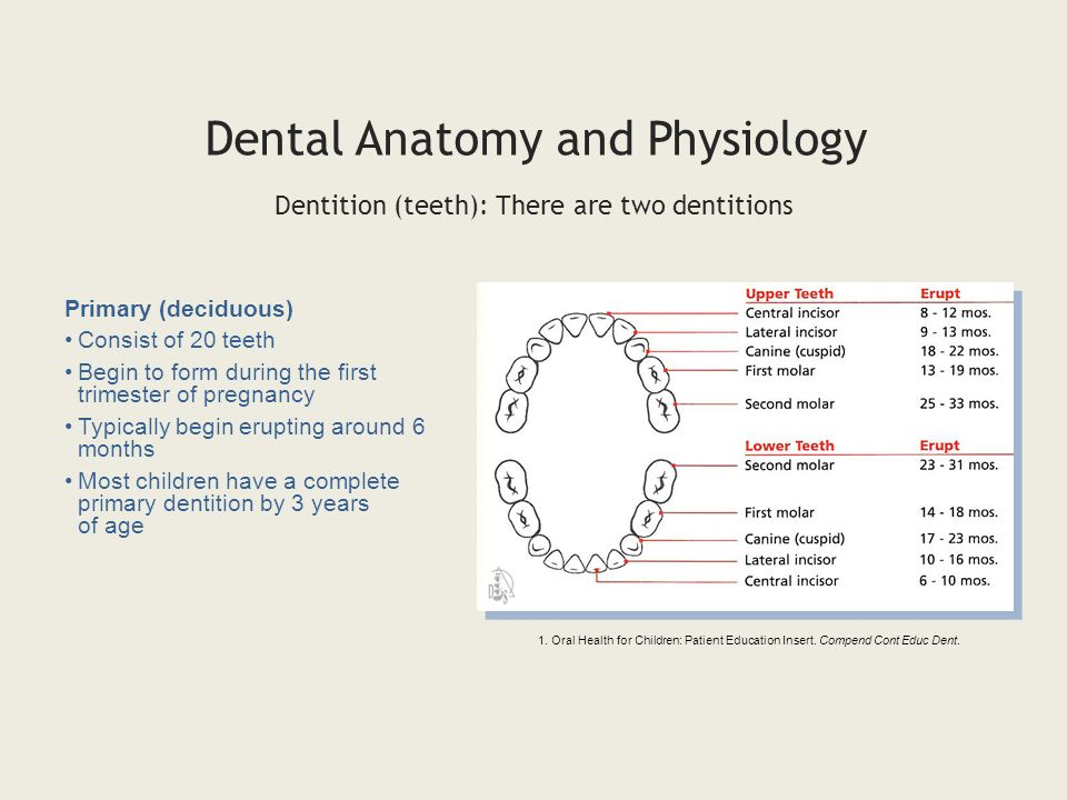 Dental Anatomy Physiology Ppt Video Online Download
