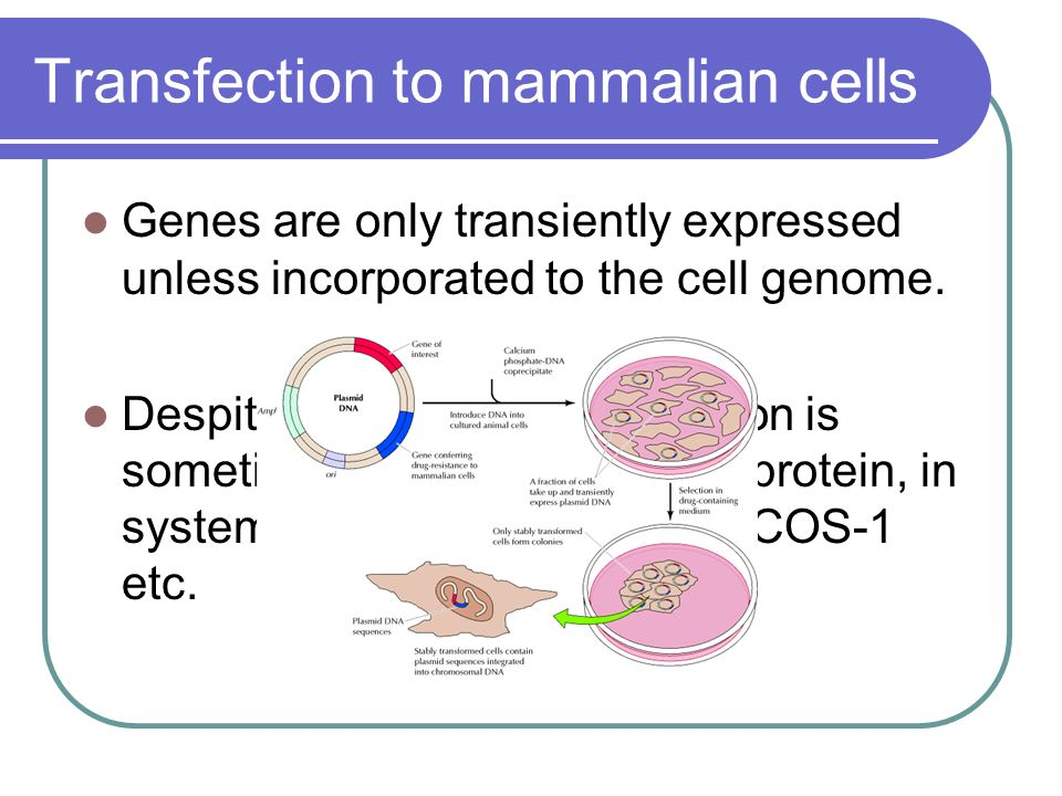 the hierarchical regulation of gene expression in mammalian cells Conserved gene expression programs integrate mammalian prostate development and tumorigenesis.