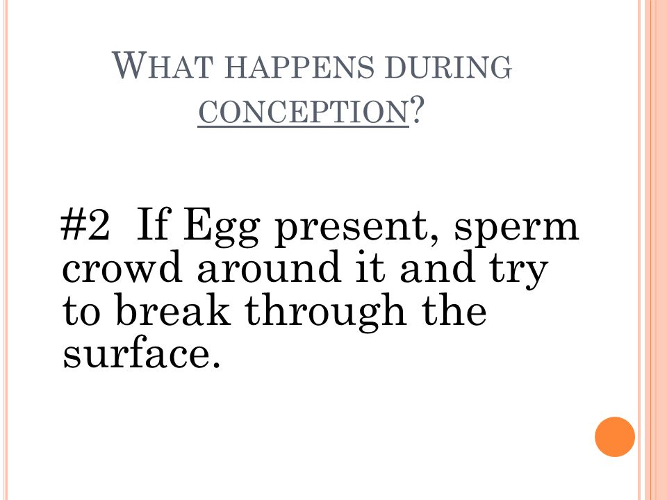 What happens during conception