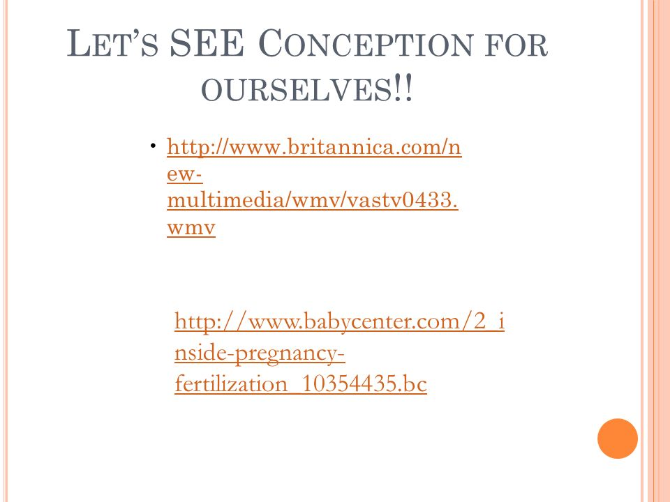 Let's SEE Conception for ourselves!!