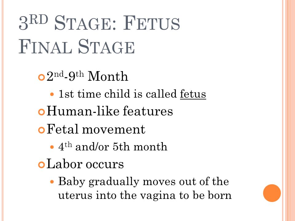 3rd Stage: Fetus Final Stage