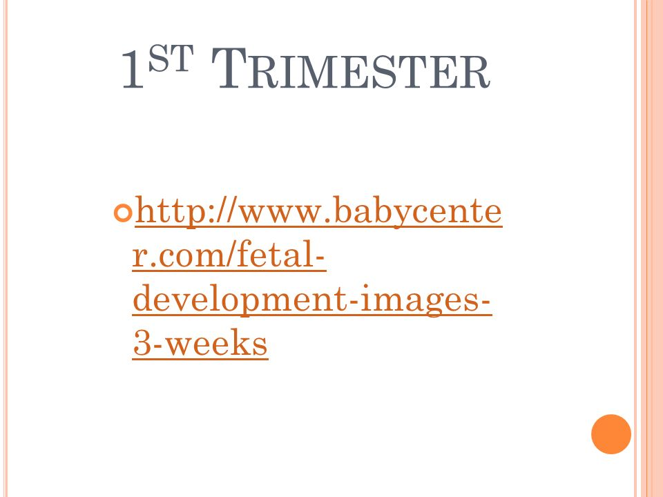 1st Trimester http://www.babycente r.com/fetal- development-images- 3-weeks