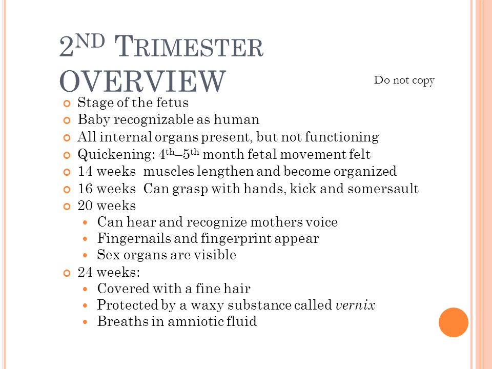 2nd Trimester OVERVIEW Stage of the fetus Baby recognizable as human