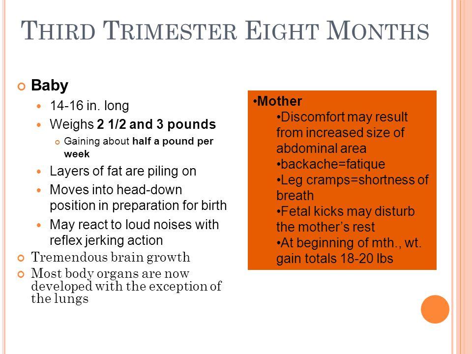 Third Trimester Eight Months