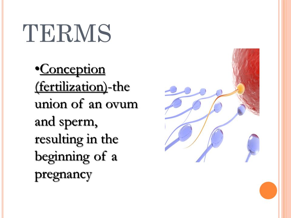 TERMS Conception (fertilization)-the union of an ovum and sperm, resulting in the beginning of a pregnancy.