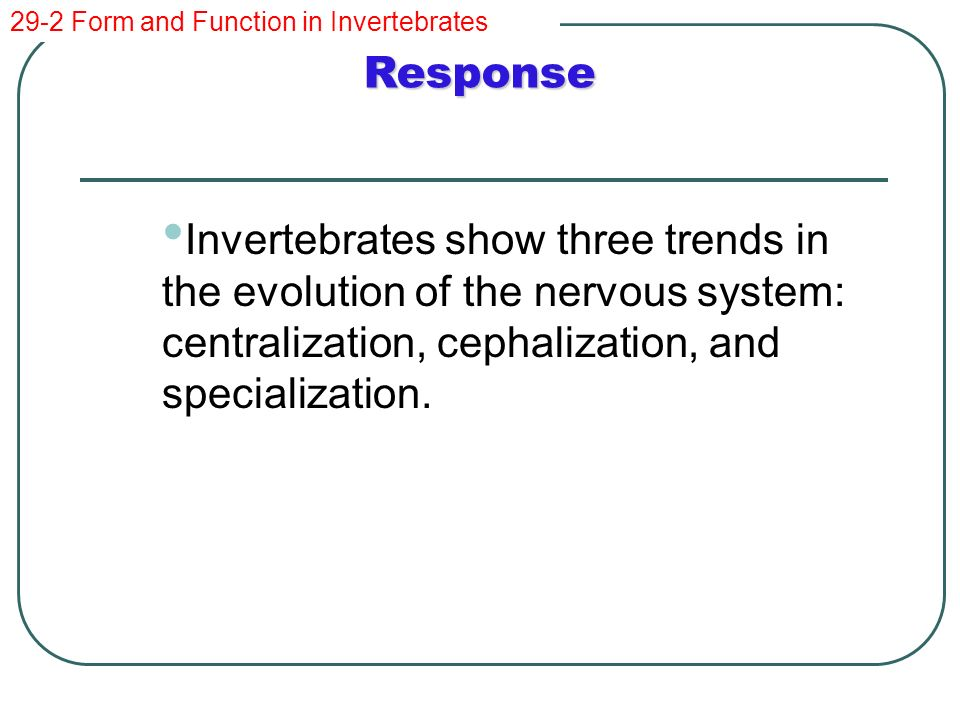 Comparing Invertebrates - ppt video online download