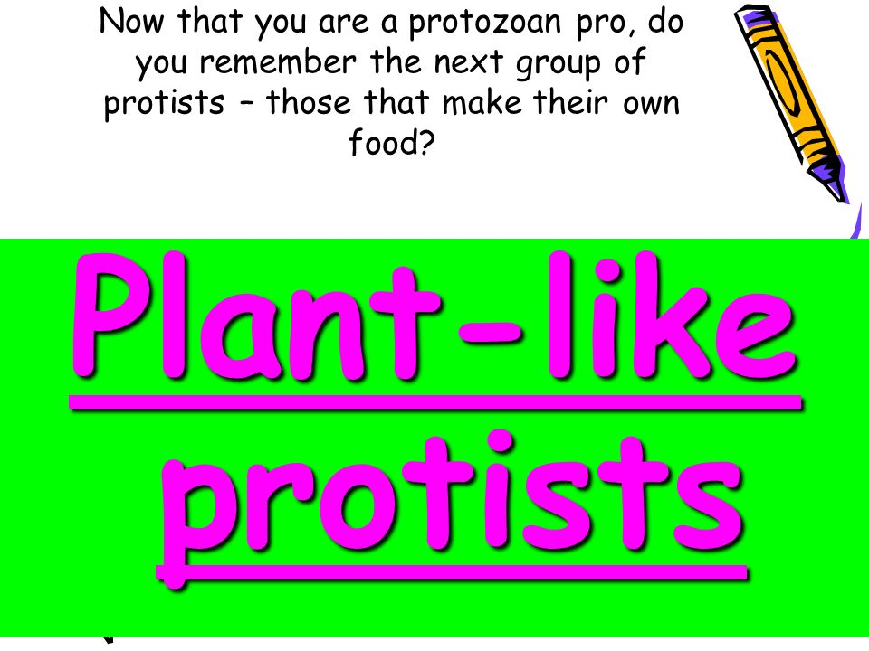 What Plant Like Protists Can Make Their Own Food