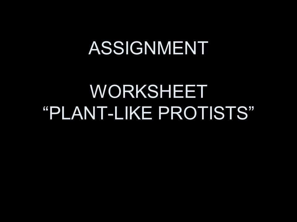 CHAPTER 8 PROTISTS AND FUNGI P 210 ppt video online download – Protists Worksheet