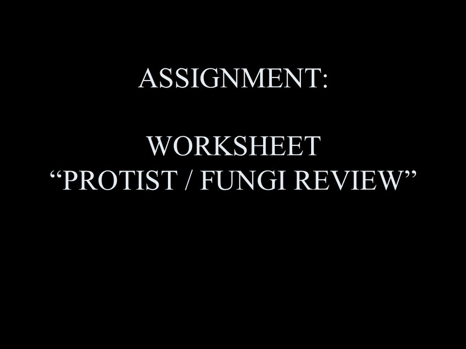 CHAPTER 8 PROTISTS AND FUNGI P 210 ppt video online download – Protist Worksheet