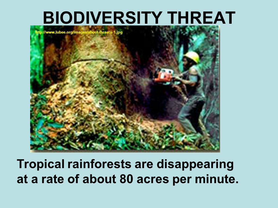 Examples List on Rainforests