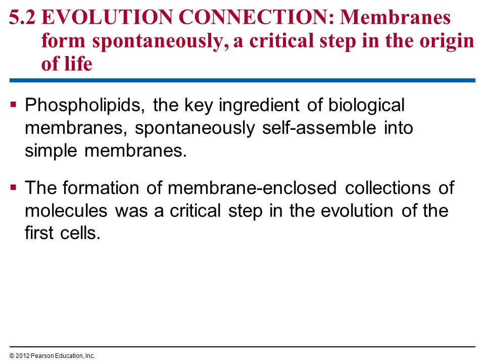 Chapter 5 The Working Cell - ppt download