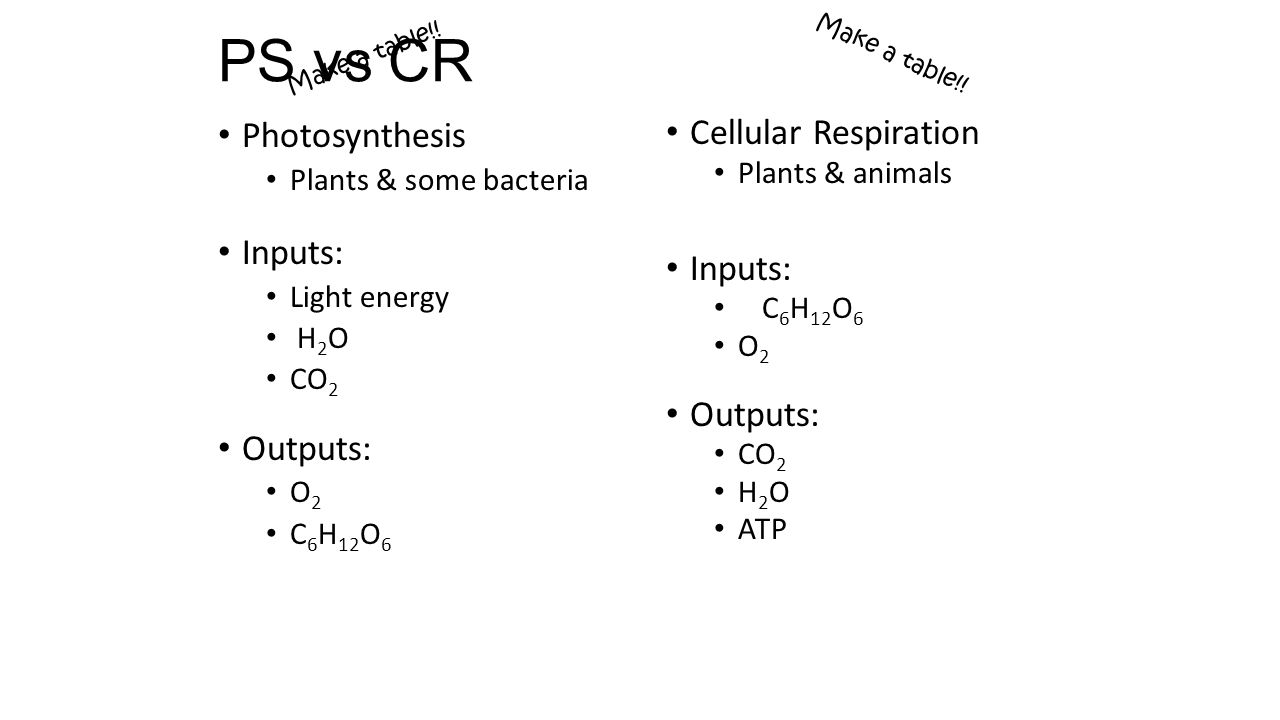 essays similarities between photosynthesis and cellular respiration One main difference between breathing and cellular respiration is that similarities breathing and cellular cellular respiration & photosynthesis.