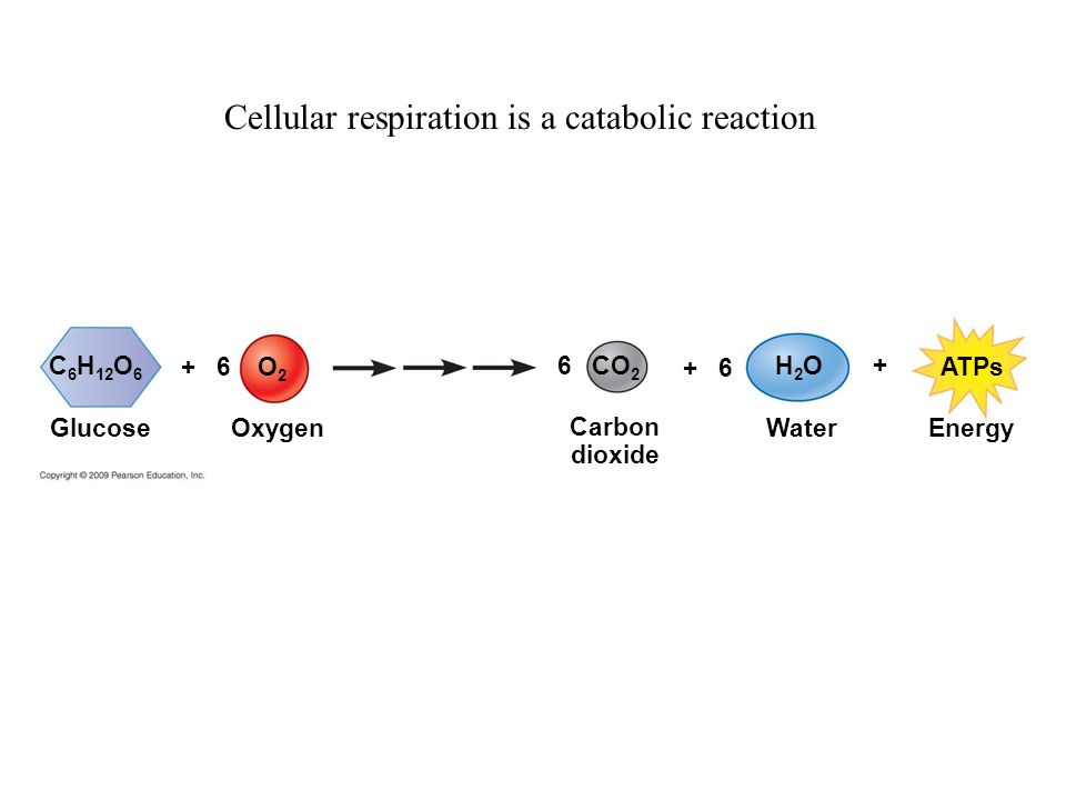 cellular respiration is an anabolic process because it requires