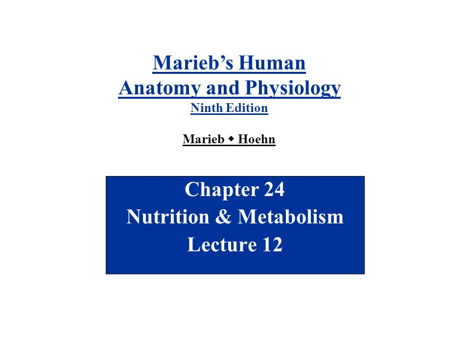 Chapter 24 Nutrition & Metabolism Lecture ppt video online download