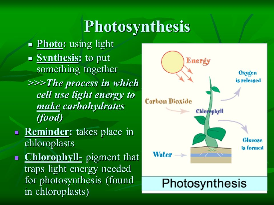 use photosythesis Photosynthesis is a chemical process that occurs in many forms of it can also be used to predict the abundance and type of submersed plants we would expect to.