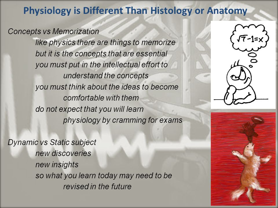 Increíble New Discoveries In Anatomy And Physiology Modelo ...