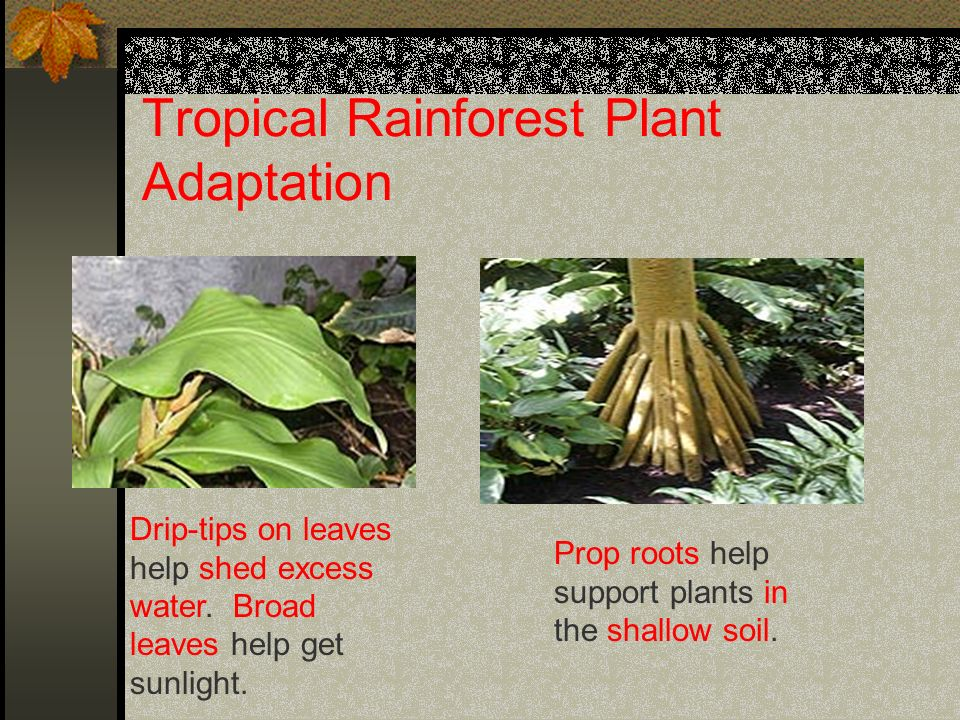 Adaptations Of Plants And Animals In The Rainforest - Best Image ...