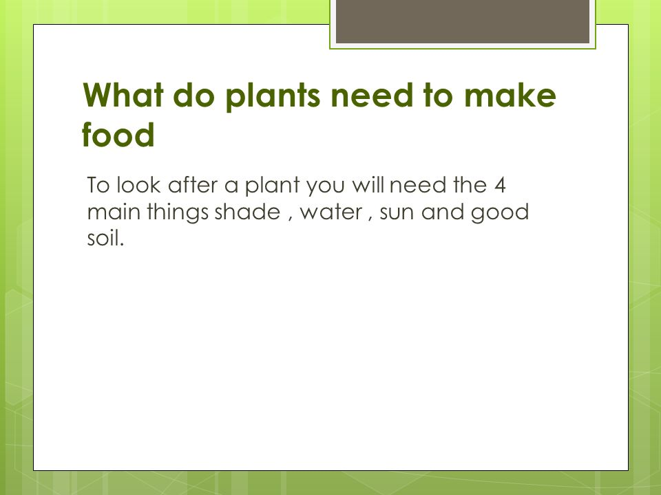 What Does Green Plants Need To Make Food  Food Ideas. How To Write A Experience Resume. Mechanical Engineering Student Resume. How To Make A Simple Resume For A Job. Building A Professional Resume. Resume Building Template. Healthcare Resume Format. Filled Out Resume Examples. How Is A Resume Different From A Cv