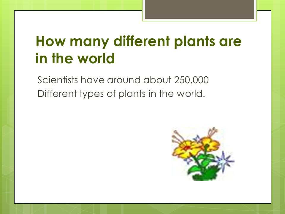 Plant Power Ppt Video Online Download