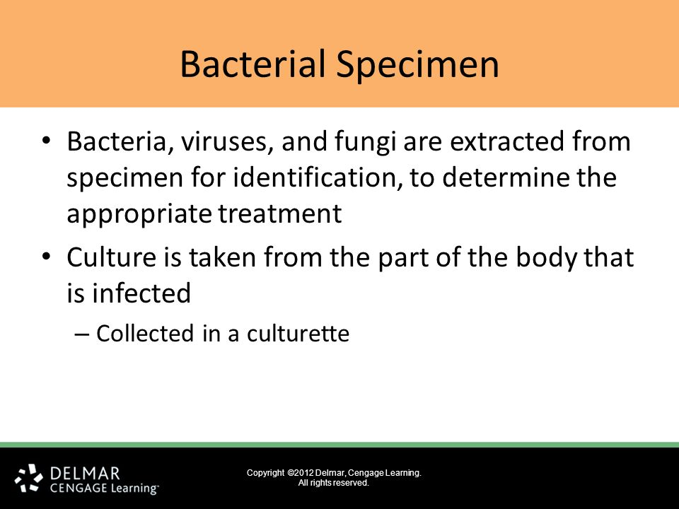 Specimen Collection And Processing Ppt Download