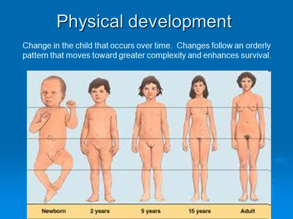 Physical Development Of Adults 102
