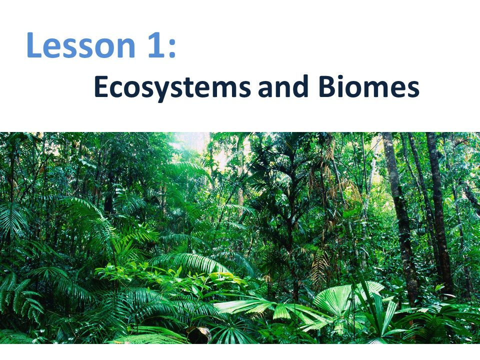 Lesson 1: Ecosystems and Biomes. - ppt download