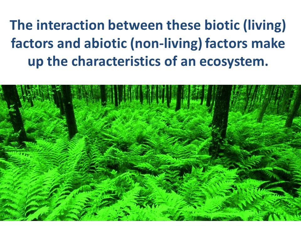 abiotic and biotic characteristic The characteristic feature of the abiotic component is lack of organic matter in the soil and scarcity of water (b) biotic component: the various biotic components representing three functional groups are.