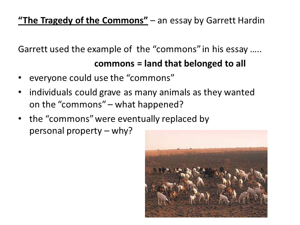 hardins tragedy of the commons essay The tragedy of the commons garrett hardin science 13 december 1968: vol 162 no 3859, pp 1243 – 1248 retrieved electronically 2/12/09 from genetically trained biologist hardin argues in this 1968 essay that uncontrolled population growth leads to misery.