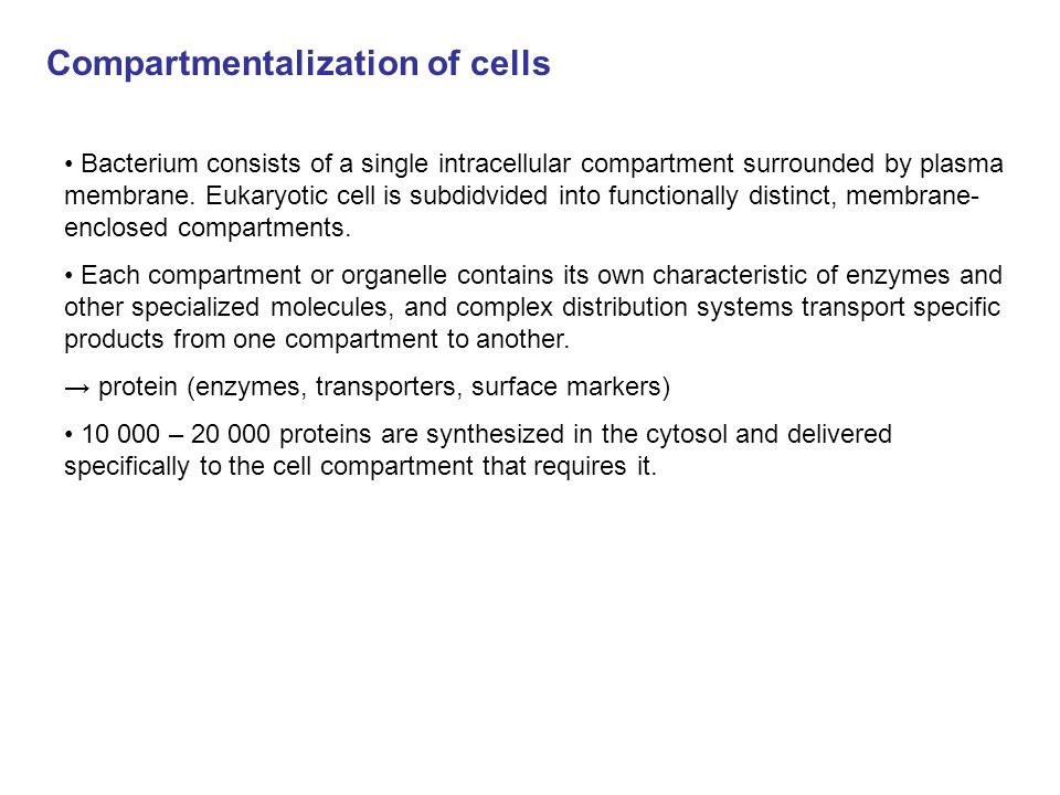 Why is compartmentalization in eukaryotic cells important?