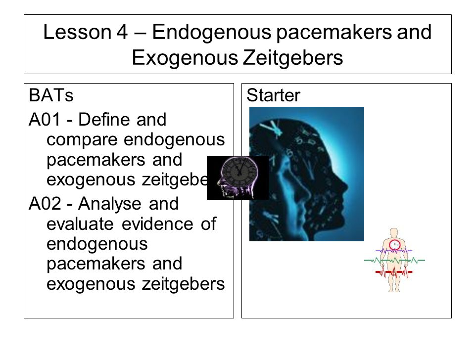 endogenous pacemakers and exogenous zeitgebers essay plan