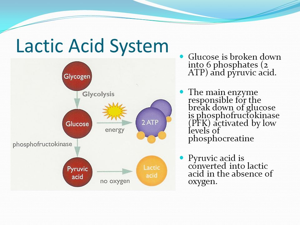 energy systems atp ce lactic acid These energy systems conclude of the atp-cp, anaerobic glycolysis, and aerobic energy systems (lactic acid build up) main energy system: atp-cp energy system duration: 6-10sec intensity of activity: very high medium distance runners.