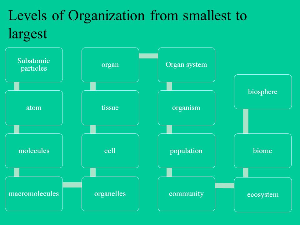 Levels Of Organization From Smallest To Largest Ppt
