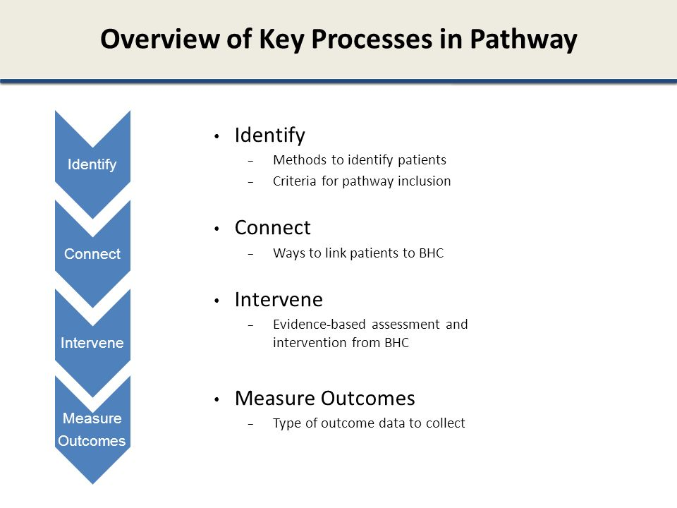 Overview of Key Processes in Pathway