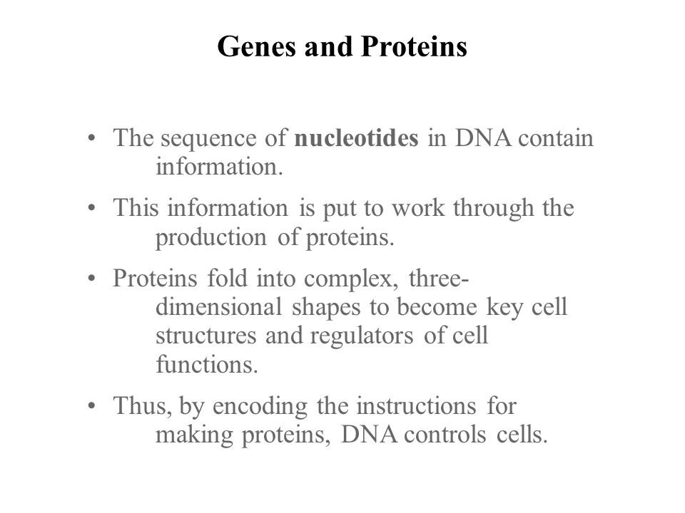 Relate the concept of the gene to the sequence of nucleotides in – Chapter 11 Dna and Genes Worksheet Answers