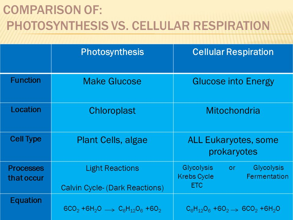 cellular respiration vs photosynthesis essay