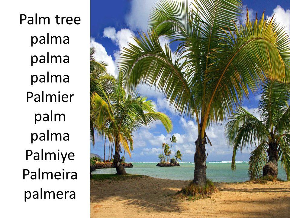 Palm tree palma palma palma Palmier palm palma Palmiye Palmeira palmera