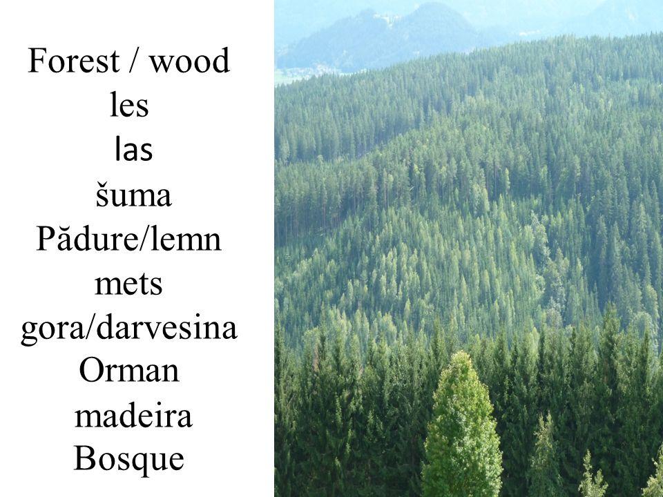 Forest / wood les las šuma Pădure/lemn mets gora/darvesina Orman madeira Bosque