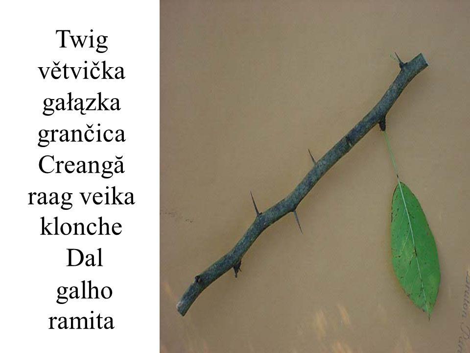 Twig větvička gałązka grančica Creangă raag veika klonche Dal galho ramita