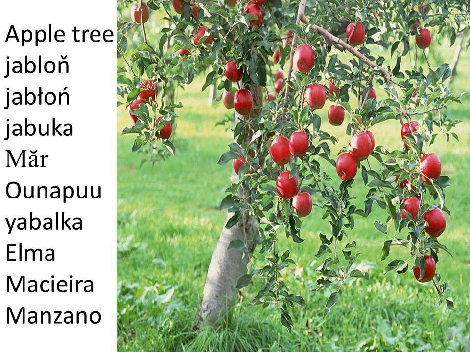 Apple tree jabloň jabłoń jabuka Măr Ounapuu yabalka Elma Macieira Manzano