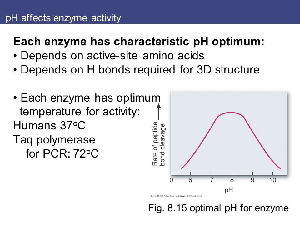 how ph affects the activity of Pre-lab exercise 2: the effect of temperature on enzyme activity 9  each  enzyme has its own optimum ph where the substrates will fit most.