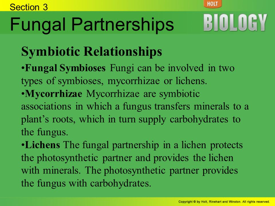 mycorrhizae and plant roots symbiotic relationship definition