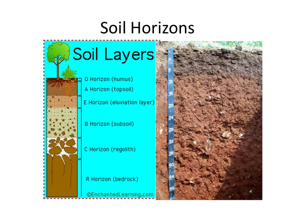 Soils ppt video online download for What are the different layers of soil