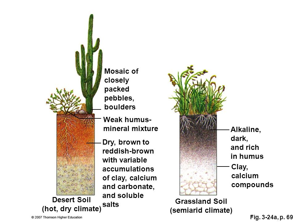 Soils ppt video online download for Mineral soil definition