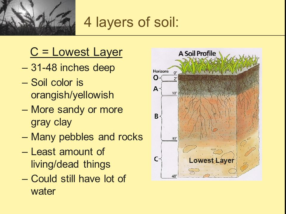 A lesson on the formation and composition of natural soil for Things found in soil